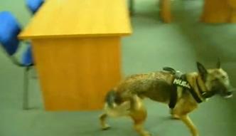 Sopot: Pies policyjny w akcji