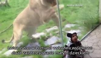 Lew chciał zaatakować dziecko