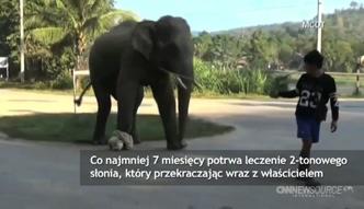 Słoń wszedł na minę w Tajlandii