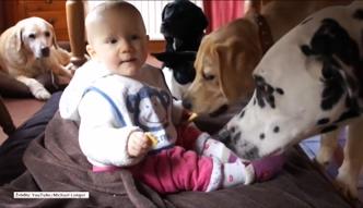 Dziecko wystawiło głodne psy na życiową próbę