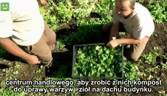 Uprawa ekologicznej żywności na dachu centrum handlowego
