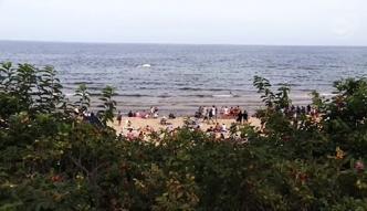 Wieloryb na polskiej plaży!