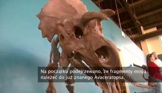 Odkryto nowy gatunek dinozaura