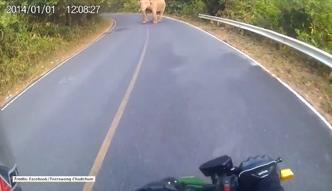 Niespodziewane spotkanie motocyklisty ze słoniem