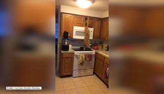 Zdeterminowany kot ryzykuje upadek, aby zdobyć jedzenie