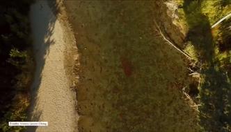 Niezwykły widok migrujących łososi