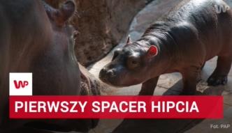 Wrocławskie ZOO wzbogaciło się o nowego i bardzo uroczego mieszkańca