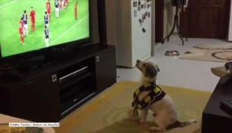 Ten pies jest fanem piłki nożnej