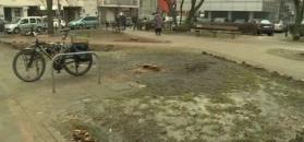 Perkowski: w Warszawie trwa rzeź zieleni