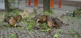 Koniec lex Szyszko. Nie będzie już masowej wycinki drzew