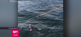 Polak przepłynął Bałtyk wpław