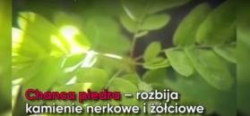 Te zioła wspomogą pracę wątroby i pęcherzyka żółciowego