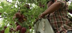Tak powstaje Applejack, najsłynniejsza jabłkowa brandy