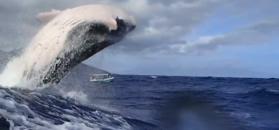 Niesamowite nagranie płetwonurków