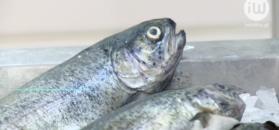 Jak wybrać świeżą, dobrą rybę
