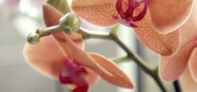 Co powinniśmy zrobić, żeby storczyki kwitły cały rok?