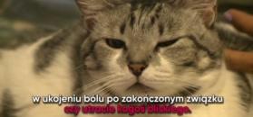 Badania - czym różnią się właściciele kotów od właścicieli psów?
