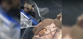 Wędkarze uratowali przed utonięciem dwa małe niedźwiedzie