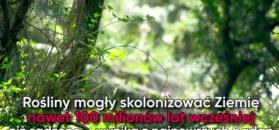 Najstarsze rośliny na Ziemi mają nawet 500 mln lat