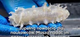 Nowe gatunki ryb
