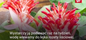 Rośliny doniczkowe, które nie wymagają zaangażowania