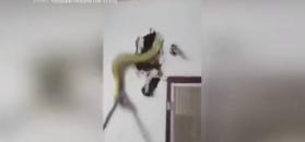 Usłyszał syk za ścianą. Ukrył się tam ogromny wąż