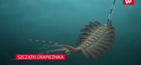 Szczątki drapieżnika sprzed pół miliarda lat