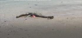 Tajemnicze truchło na plaży w USA