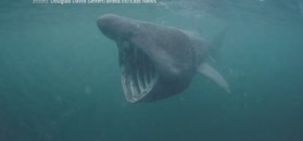 Gigantyczne rekiny