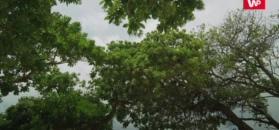 Drzewa mają puls