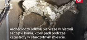 W złodziejskich tunelach odkryli cenne szczątki