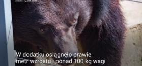 O psie, który okazał się niedźwiedziem