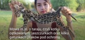 Nagrywali jak zjadają chronione gatunki zwierząt. Trafili do aresztu