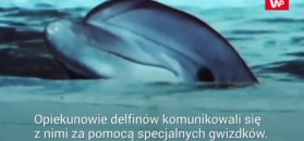Dziwna historia delfinów z Krymu.