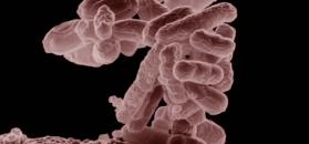 Superbakteria w Polsce. Nie da się jej zwalczyć antybiotykami