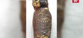 Tajemnica małej mumii