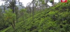 Odchudzające właściwości czarnej herbaty