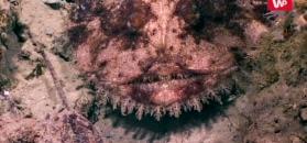 Niesamowity podwodny świat