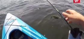 Największa ryba jego życia uciekła. Nagranie z kajaka