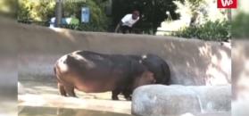 Skrajna nieodpowiedzialność w zoo