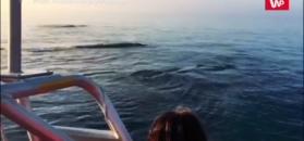Niezwykły pokaz waleni. Nagranie świadka