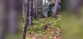 """""""Oddychający"""" las. Niezwykłe nagranie z Kanady"""