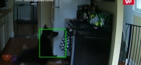 Pies i kuchenka gazowa. Połączenie dosłownie wybuchowe