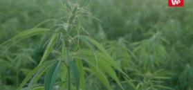 Wpływ marihuany na młodych