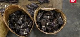 Zaskakujące doniesienia o wanilii. Różnica to 2600 lat