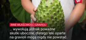 Graviola - czy jest zdrowa?