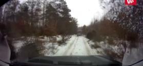 Latający jeleń. Niezwykłe nagranie z Nadleśnictwa Łomża