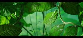 Robaczki z Zaginionej Dżungli - zwiastun