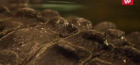 Antarktyda miliony lat temu wyglądała zupełnie inaczej. Niepodważalny dowód