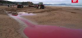 Martwy wieloryb na plaży w Hiszpanii